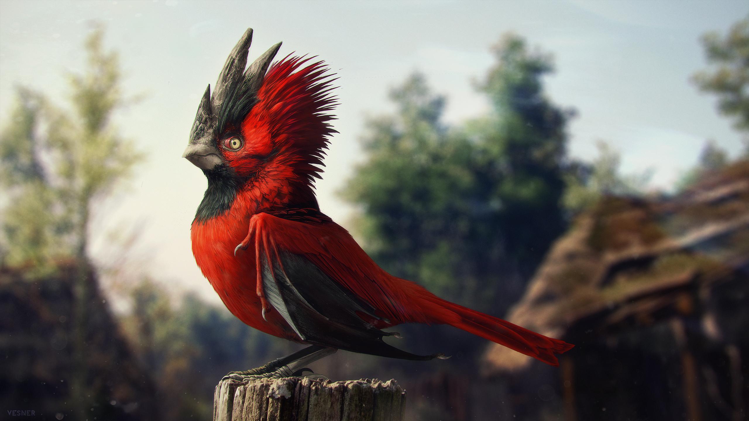 kate's_cardinal.jpg
